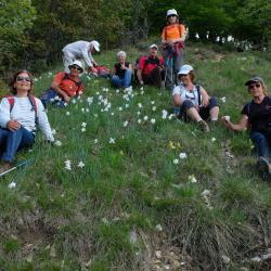 La crête de Vaumusse 17 mai 2016  Et pour finir la descente fleurie!!