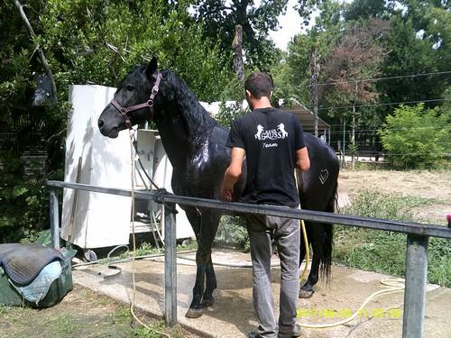 Gruss 2  Pansage du cheval
