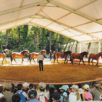 Piolenc au Parc du Cirque Gruss 29 juin 2017