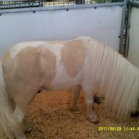 Gruss 6 un poney mal peigné!!