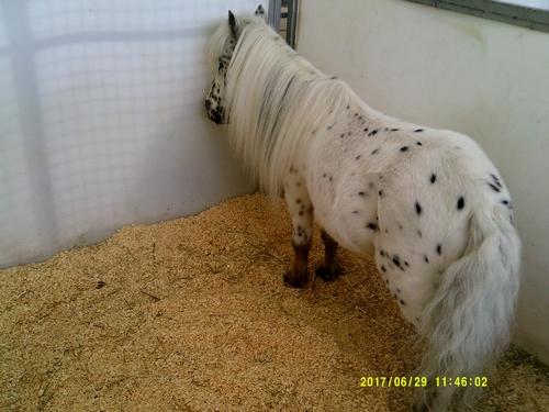 Gruss 7 un poney moucheté boudeur!!